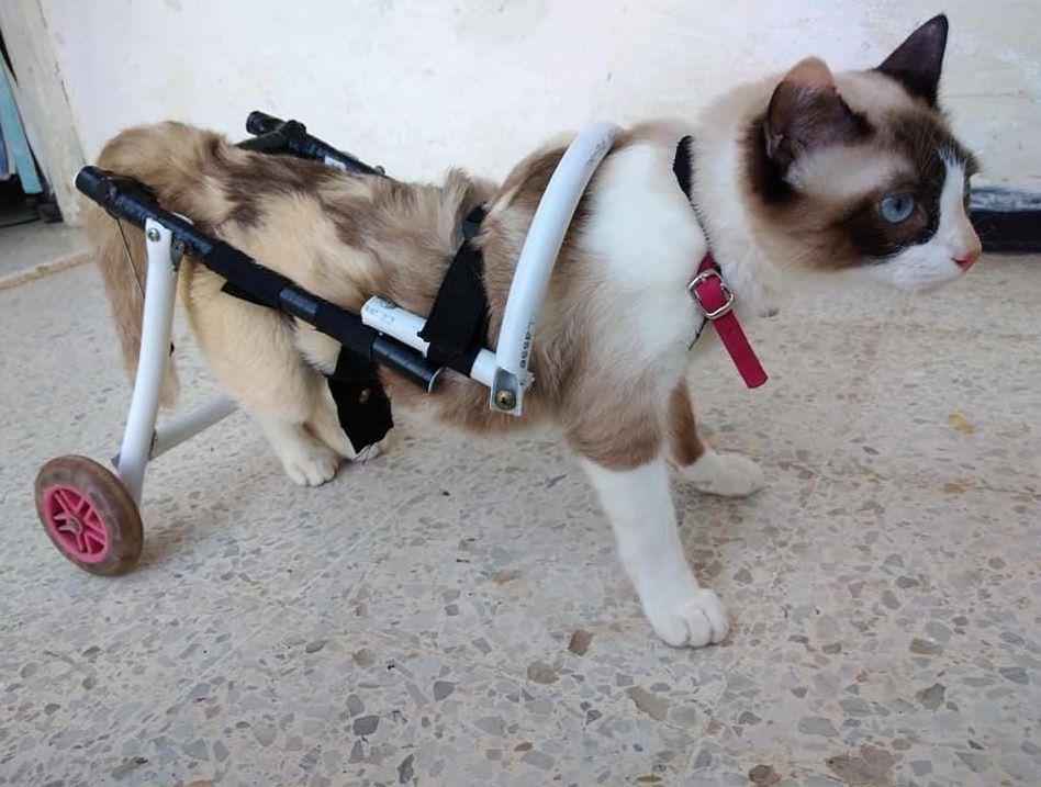 قطة عالجها الشاب التونسي أحمد المناعي