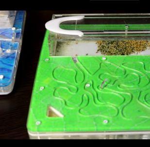 بالفيديو... ماذا يحدث إذا وضعت نملة غريبة في وكر نمل