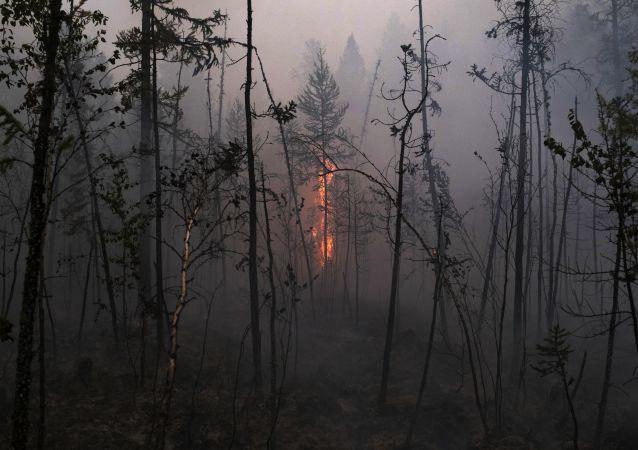 حرائق الغابات في روسيا