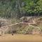 ثعالب الماء تهاجم نمرا أمريكيا بعد أن سرق صغيرهم