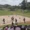 قطيع من القردة يهاجم طلاب يلعبون كرة السلة