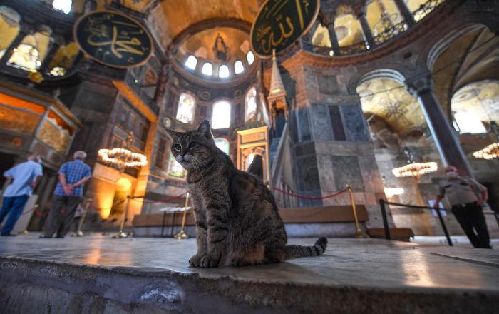 """بالصور… من هي """"غلي"""" المثيرة للجدل في """"آيا صوفيا""""… وما هو مصيرها بعد تحويله لمسجد؟"""