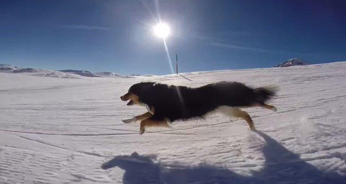 كلب لطيف يستمتع بالتزلج على الجليد