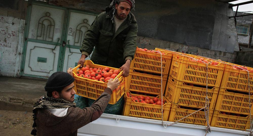 غزة تصدّر الخضروات والفواكه إلى إسرائيل