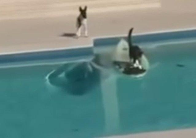 قط يهرب من كلب يطارده