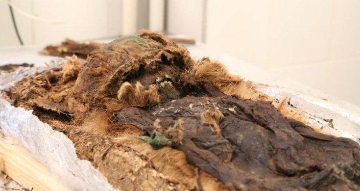 اكتشف العلماء مومياء محنطة لصبي صغير، ملفوفة في طبقات من الفراء وأوراق الشجر، ودفن إلى جانب رأسه فأس برونزية صغير، تعود الى القرن الـ13