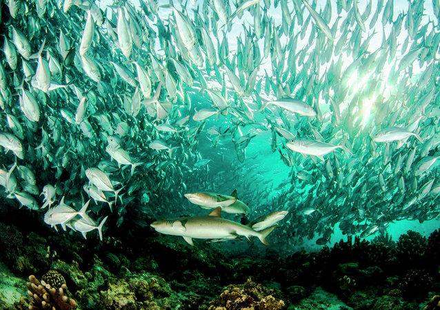التصوير تحت الماء