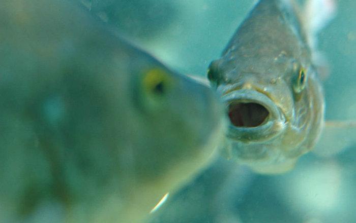 """بعمق """"اللانهاية""""… العلماء يصنعون كاميرا موبايل خارقة من عيون الأسماك… صور"""