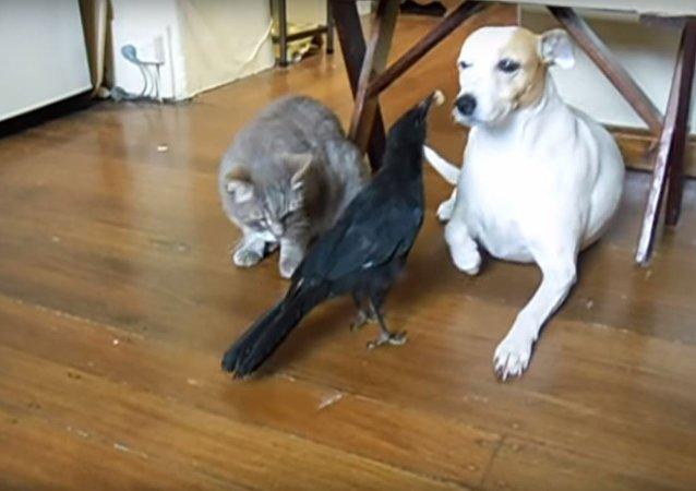 طائر يطعم كلباً وقطاً