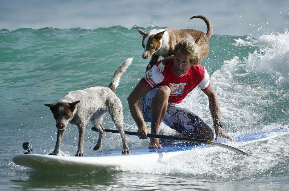 كريس دي أبواتيز، راكب أمواج البحر يتدرب مع كلابه على ركوب أمواج البحر في أستراليا، 18 فبراير/ شباط 2016.