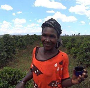شرب القهوة فى كينيا
