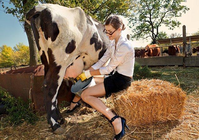 الشرطة... أعيدوا زوجتي لتربي الأبقار