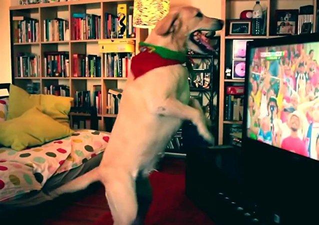 أول كلب مشجع!