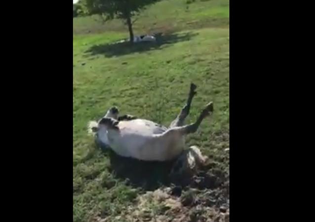 حصان ميت ؟!