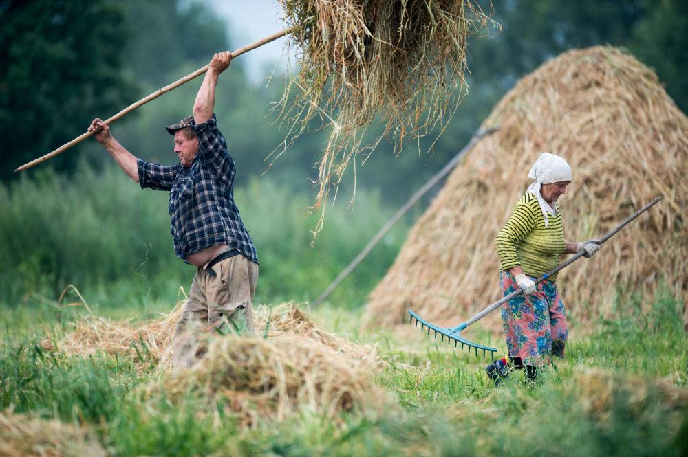 سكان قرية بوبروكا بمقاطهة أومسك الروسية خلال حصاد القش