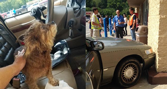 كلب يقود سيارة في الولايات المتحدة