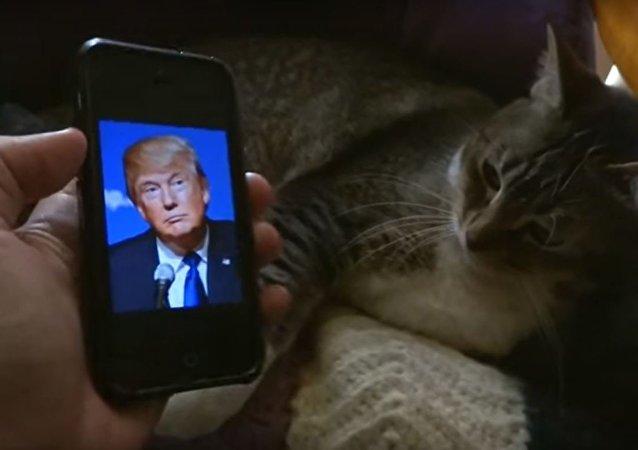 قط يبغض دونالد ترامب