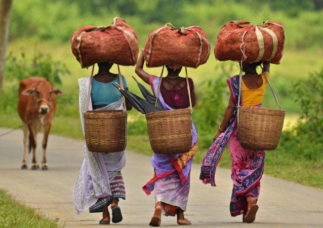 نساء هنديات تحملن أغراضهن على رؤوسهن في حقل زراعي للشاي في ولاية آسام، الهند 22 أغسطس/ آب 2016