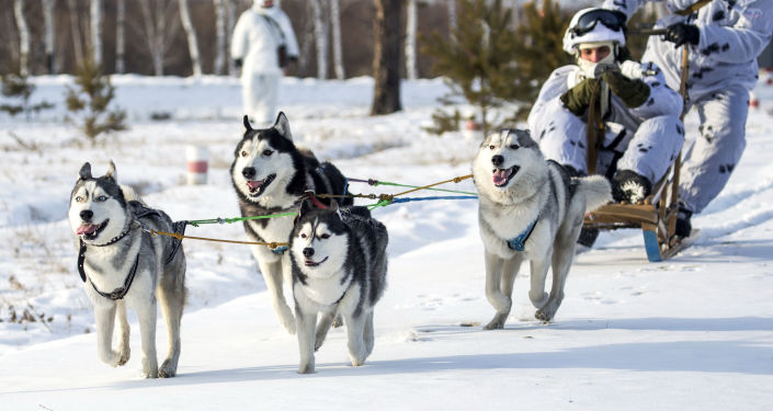وحدة مشاة القطب الشمالي التابعة لكلية القيادة العليا خلال التدريب العملي في إقليم أمورسكي.