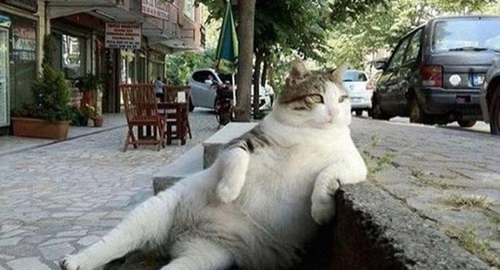 قط يحب التفكير في اسطمبول