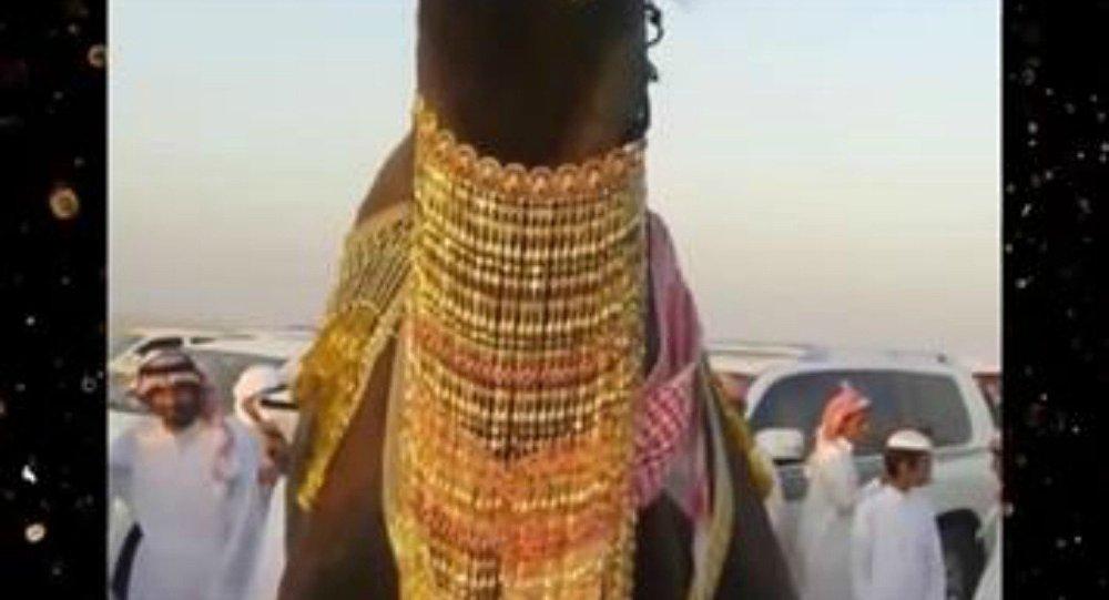 ناقة سعودي
