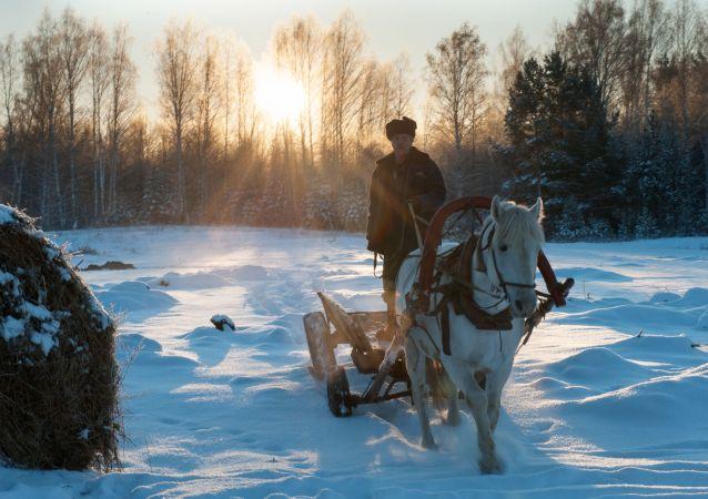 عربة يقودها رجل في قرية بيريزوفكا بمقاطعة تومسك