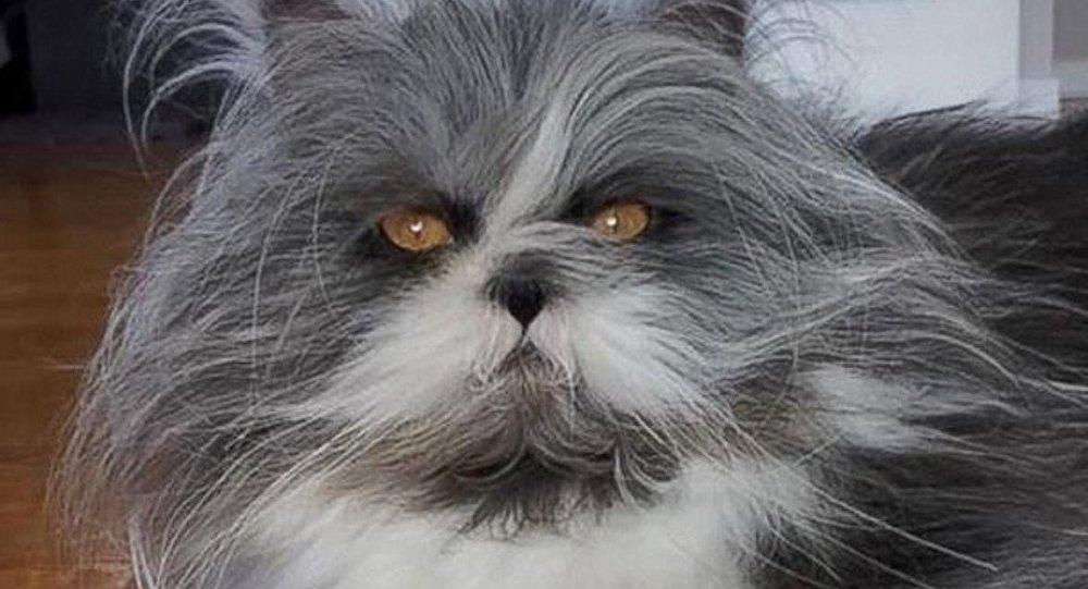 هل هذا قط أم كلب