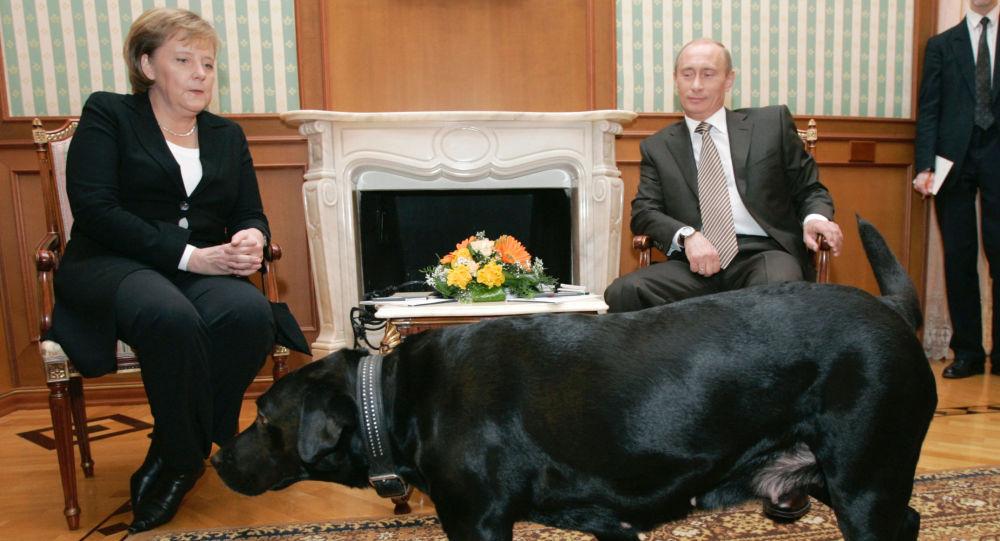 الرئيس فلاديمير بوتين والمستشارة الألمانية أنجيلا ميركل خلال اجتماعهما بالمقر التابع للرئيس الروسي في بوتشاروف روتشي
