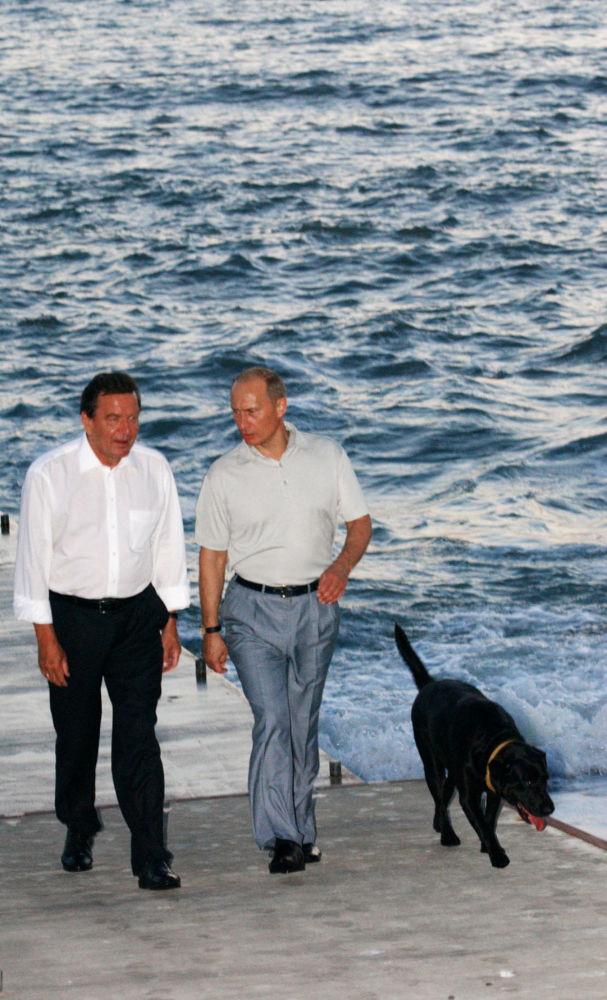 الرئيس فلاديمير بوتين خلال لقائه بالمستشار الألماني غيرهارد شرودر في مدينة سوتشي