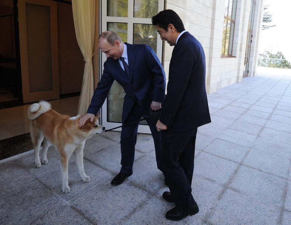 الرئيس الروسي فلاديمير بوتين ورئيس الوزراء الياباني سيندزو آبي خلال الاجتماع في المقر الرئاسي بوتشاروف روتشي بروسيا.