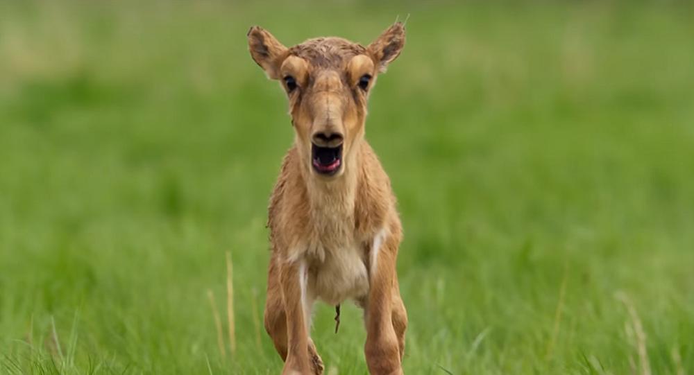 حيوانات تصرخ كالبشر