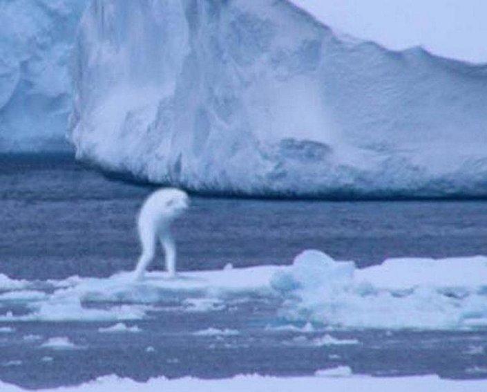 وحوش القارة القطبية الجنوبية – Kryon