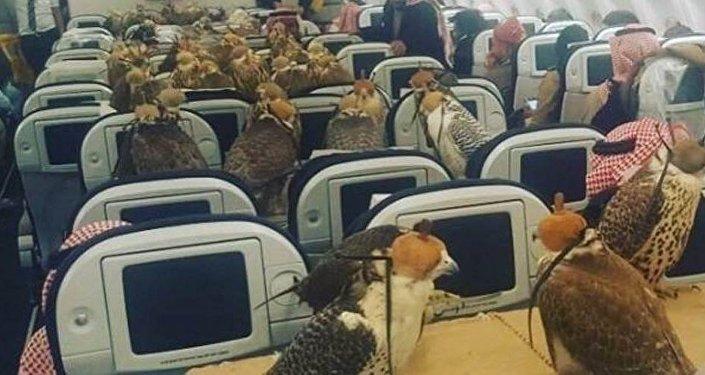 صقور في الطائرة