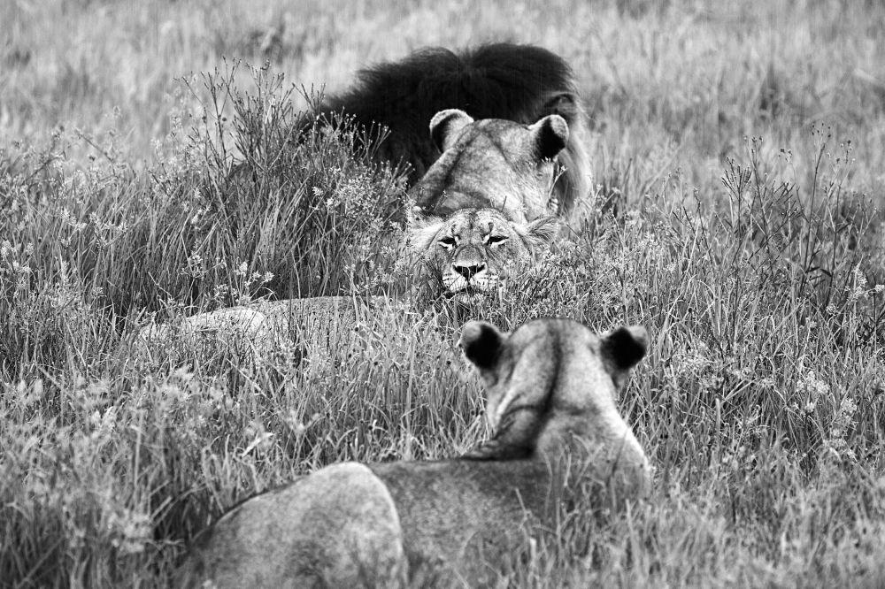 المحمية الطبيعية نامبيتي غيم ريزيرف في جنوب أفريقيا - للمصور  ميغيل دي فريتاس المشارك في مسابقة National Geographic Traveller-2017