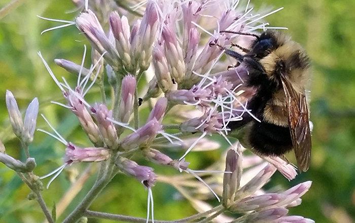 علماء يكتشفون أقراصا عسلية ثلاثية الأبعاد في خلايا النحل… صور