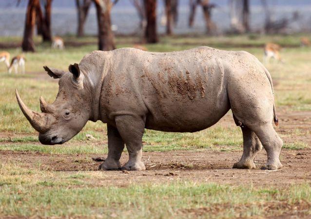 وحيد القرن