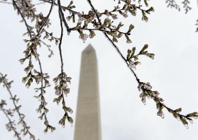 الربيع في واشنطن،  الولايات المتحدة 18 مارس/ آذار 2017