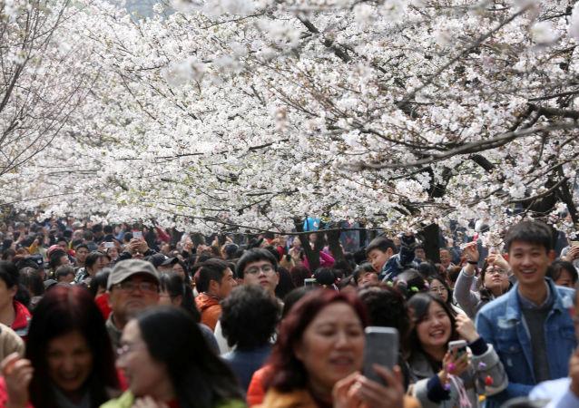 السياح يلتقطون صور على خلفية أزهار الكرز المتفتحة في حديقة في نانجينغ، الصين 21 مارس/ آذار 2017