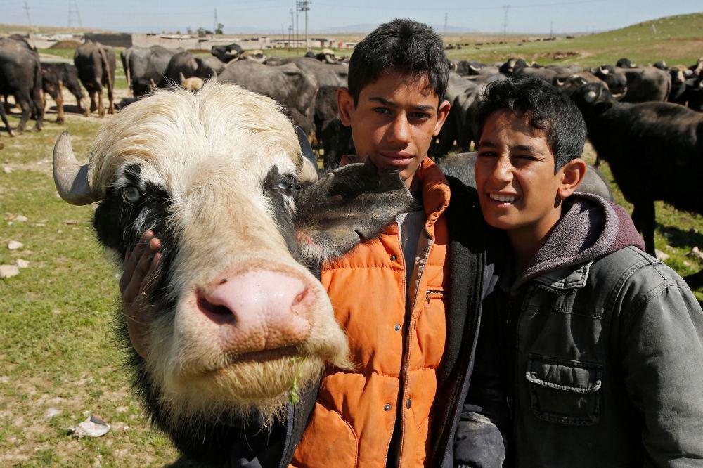 الفلاحون العراقيون من بادوش، شمال غرب الموصل، الذين هربوا من قريتهم إثر المعارك الدامية ضد تنظيم داعش الإرهابي، ومن ثم عادوا إليها لأخذ جاموسهم وأبقارهم، وذلك نظراً لاستمرار لاستمرار المعارك هناك، العراق 25 مارس/ آذار 2017