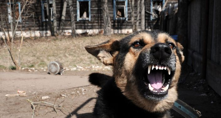 كارثة تشيرنوبيل - كلب بجوار منزل هجره أصحابه في قرية تولغوفيتشي بعد الكارثة