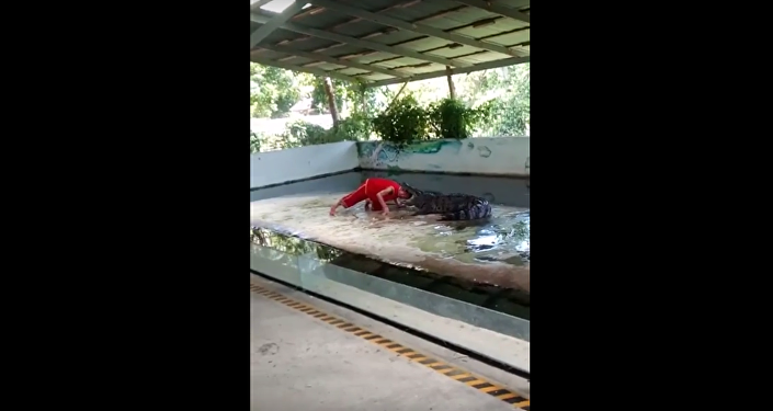 تمساح ينقض على رجل