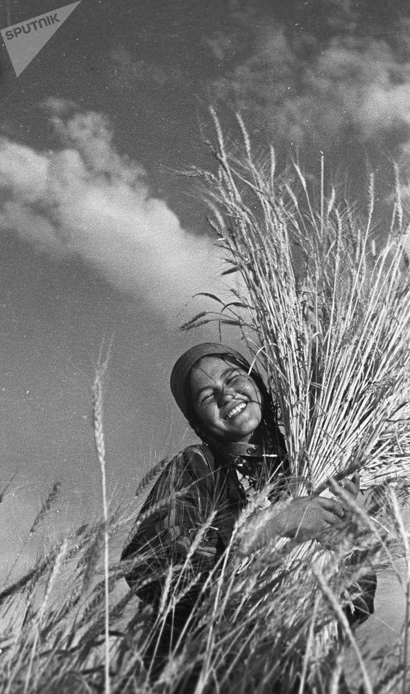 حصاد الحبوب في الحقول، جمهورية تركمانستان الاشتراكية السوفياتية عام 1939