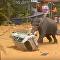 فيل يهاجم سيارة