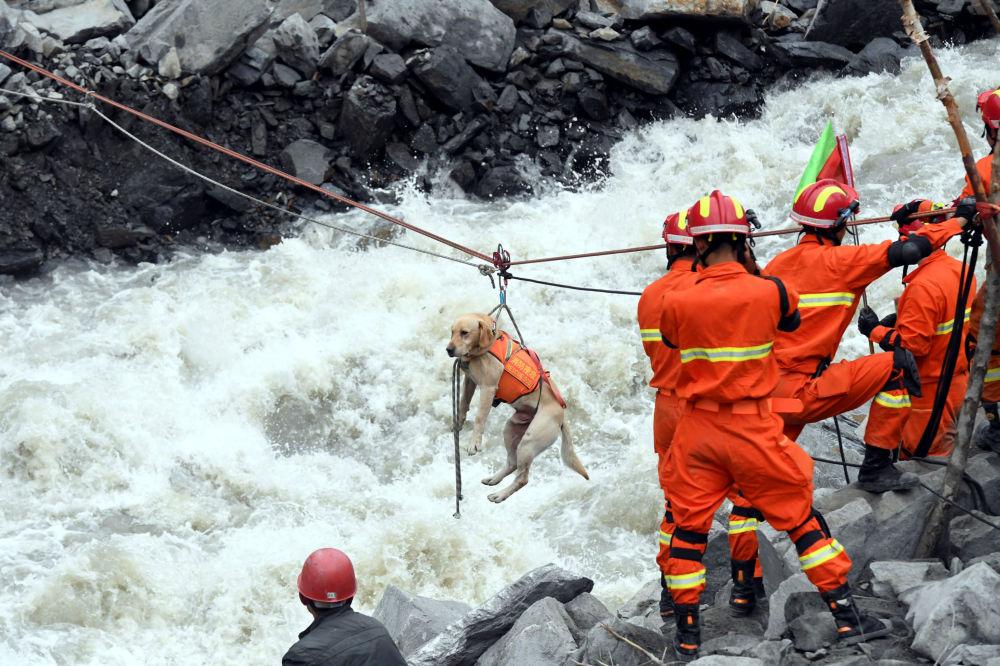 رجال إنقاذ ينفذون عملية إنقاذ كلب في الصين