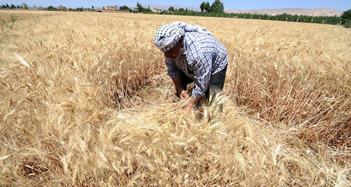 مزارع سوري