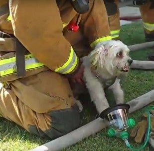 انقاذ كلب من حريق