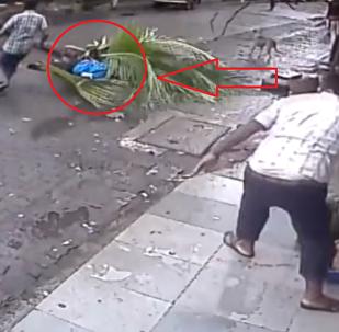 موت مذيعة هندية شهيرة أثناء سيرها في الشارع بسبب نخلة