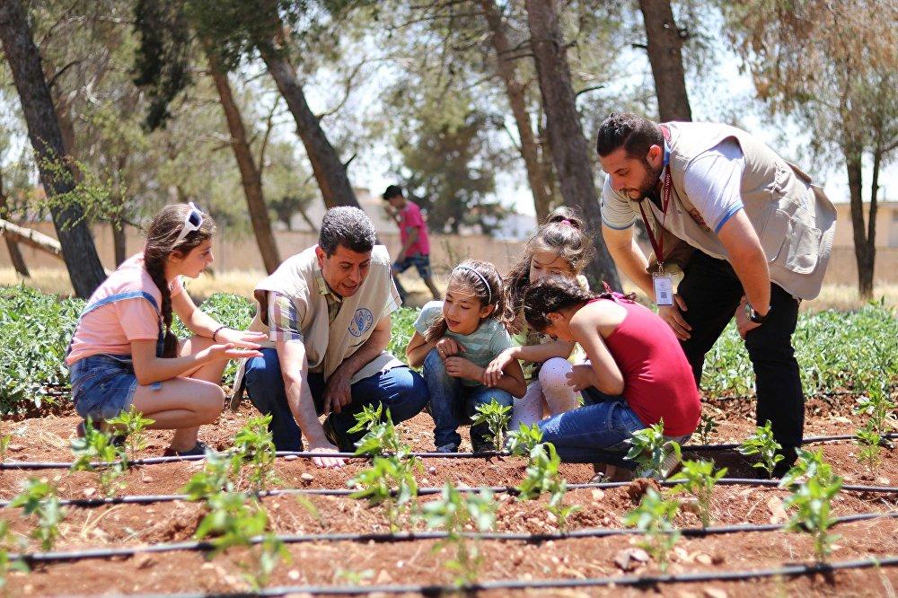 الأمم المتحدة تزرع المدارس السورية بالخضار