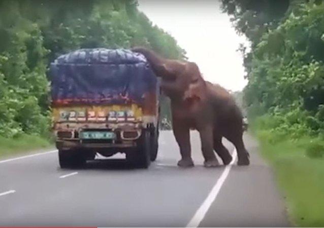 فيل يسرق شاحنة