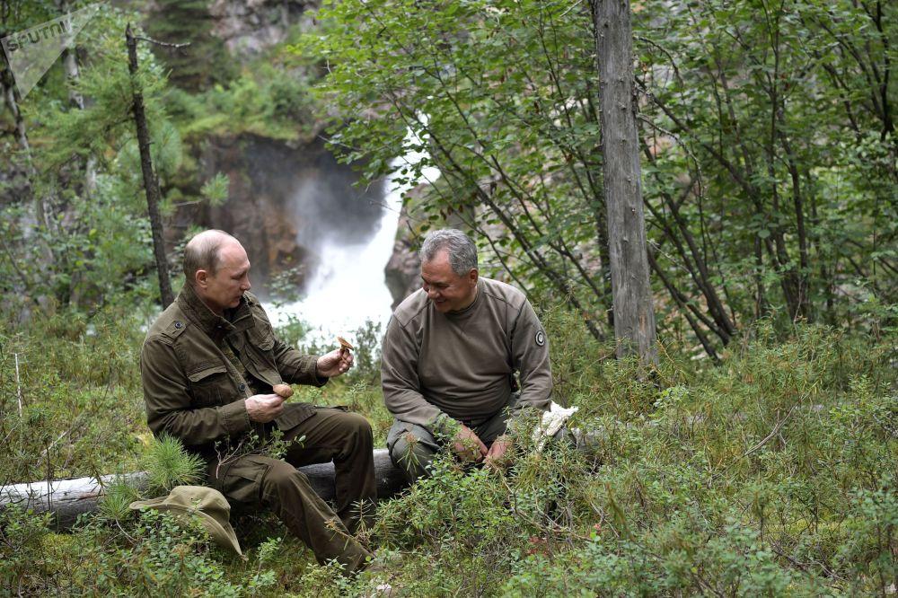 الرئيس فلاديمير بوتين ووزير الدفاع سيرغي شويغو خلال جمع الفطر في غابة  في جمهورية تيفا، روسيا (1-3) أغسطس/ آب)